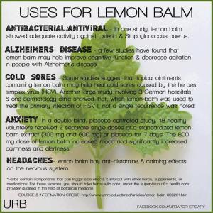 LemonBalm photo