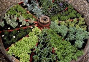 Medicinal herb gardenwheel photo